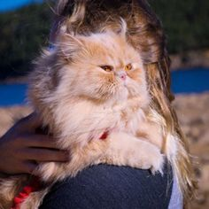 Floyd Is Now Colorado's Most Popular Cat - We Love Cats and Kittens