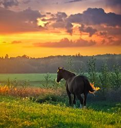 Beautiful horse, background & sky .... would love to paint this!!