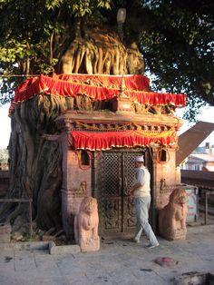 arjuna-vallabha:  Nepali temple or tree :)