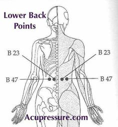 39 Best Acupuncture       images in 2016   Acupuncture