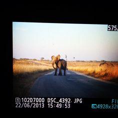 Angry Elephants. Kruger National Park, South Africa. #lawoftravelling Kruger National Park, Big 5, African Elephant, Elephants, South Africa, Travelling, Law, Instagram, African Bush Elephant
