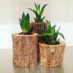Set of 3 driftwood succulent planters. The planters have a 2 hole for planting succulents. The set includes a … Driftwood Planters, Driftwood Crafts, Wooden Planters, Indoor Planters, Diy Planters, Succulent Planter Diy, Planting Succulents, Tree Stump Furniture, Suculentas Diy