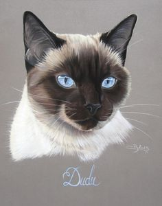 Les Pastels de Chats | Artiste Animalier