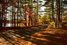 Beautiful Autumn drive on Lakeside Drive - by the reservoir in Stamford CT Stamford, Connecticut, Roots, Things To Do, To Go, Country Roads, Autumn, Adventure, City