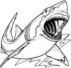 Images For Realistic Sea Animal Coloring Pages Shark