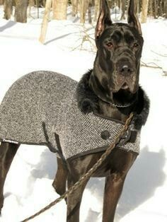 Diy dog sweater great dane 68 ideas for 2019 Large Dog Sweaters, Puppy Supplies, Dog Clothes Patterns, Dog Jacket, Dog Wear, Dog Dresses, Dog Coats, Dog Harness, Pet Clothes