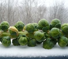 Brussels Sprouts With Pecans, Garlic and Basil Louisiana Kitchen, Lettuce, Pecan, Basil, Garlic, Brussels Sprouts, Vegetables, Pecans, Vegetable Recipes