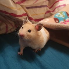 Say hi to Barney! Hamsters, Say Hi, Sayings, Pets, Animals, Lyrics, Animaux, Animal, Word Of Wisdom