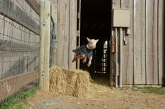 where we want to be Farm Animals, Animals And Pets, Cute Animals, Funny Animals, Happy Goat, Cute Goats, Baby Goats, Kittens, Cats