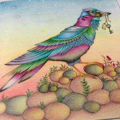 Finished!!!!! #johannabasford #florestaencantada #enchantedforest #jardimsecreto #lapisnorma #antistress #nossojardimsecreto #colorterapia #bird #sextante #colorbute #jardimsecretoinspire #viciodecolorir