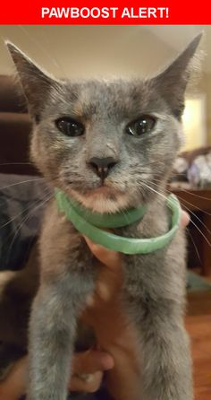 Is this your lost pet? Found in Daphne, AL 36526. Please spread the word so we can find the owner!  Grey Calico with new flea collar  Nearest Address: Jubilee Square, 7100 US-90, Daphne, AL 36526