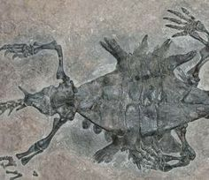Pigmento de la piel en fósiles da pistas sobre el color de animales extintos