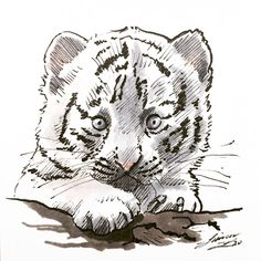 White Tiger Cubs, Sim, Baby Animals, Sketches, Drawings, Illustration, Painting, Instagram, Baby Pets