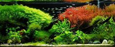 2006 AGA Aquascaping Contest - Entry #100