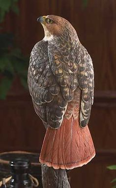 home >> wildlife sculpture Red Tailed Hawk The red-tailed hawk is so familiar, yet this distinctive bird of prey is always exciting to observe. The red-tailed Hawk is one of America's most familiar an