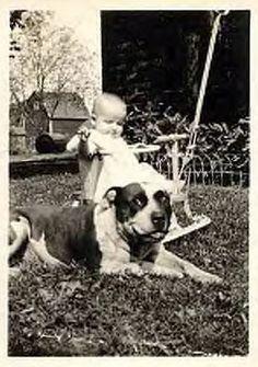 "pit bulls- ""the nanny dog"""