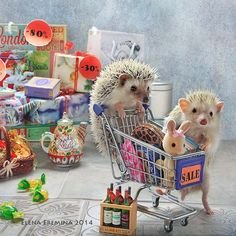 black Friday - This picture is taken for a wall calendar with hedgehogs for 2016. You can look also at calendars with hamsters for 2015 http://www.amazon.de/s/ref=nb_sb_noss?__mk_de_DE=%C3%85M%C3%85%C5%BD%C3%95%C3%91&url=search-alias%3Daps&field-keywords=stillleben+hamster http://vk.com/hamsters.calendar