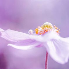 botanical fine art photography pink  - purple violet nature photography 5x5 - lilac pastel spring macro print flower clickety. $13.00, via Etsy.