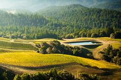 Where to Go Wine Tasting in California Now | Fodor's