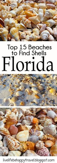 Popular Beaches In Florida. Places To Stay In Florida. The Beaches of Florida are worldwide known as one of the best vacation destinations in the entire world and are with that, the most incredible holiday-trip travel spots for every Beach Lover. Visit Florida, Florida Living, Florida Vacation, Florida Travel, Vacation Trips, Travel Usa, Destin Florida, Vacation Spots, Florida Keys