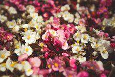 Summer flowers #19 by Lagunova_Maya on Creative Market