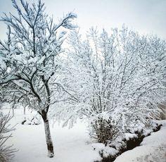 Paysage neigeux de Ban-sur-Meurthe ❄✨ #snow #vosges