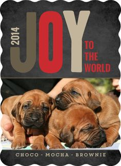 Wondering What To Write In Your Holiday Cards? Use These Holiday Card  Sayings To Find Inspiration. Family, Cat, Dog, Religious, U0026 Non Religious  Wording.
