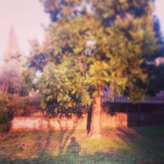 #person #trees #garden #grass #green #shadow #walking #country #nature #home #girl #sun #light #freedom #love #calore #instamoment #novellaorchidea #novella #orchidea #raccontierotici #racconti #ebook #ricardo #tronconi #staytuned #followme #eroticnovel