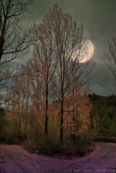 sapphire1707:  Chiaro di luna by toni jara on Flickr.