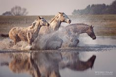 the-love-of-horses:  (via First Day Of Spring by Wiebke Haas / 500px)