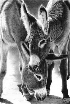 Jack & jill by glynnis miller pencil 16 x 12 drawing наброски, лошади, Farm Animals, Animals And Pets, Funny Animals, Cute Animals, Pretty Horses, Beautiful Horses, Animals Beautiful, Cute Donkey, Pencil Drawings Of Animals
