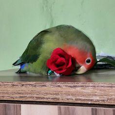 Yakışıklım bana çiçekte getirmiş almazmıyım :* ♥