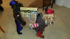 Dog Pirate Costume 2014