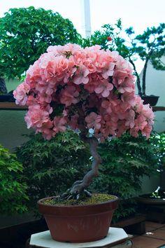 Bonsai Tree Care, Bonsai Tree Types, Indoor Bonsai Tree, Bonsai Art, Bonsai Plants, Bonsai Garden, Bonsai Trees, Planter Garden, Plantas Bonsai