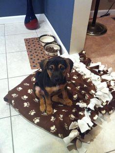 Remi the German Shepherd black&tan coonhound Mix