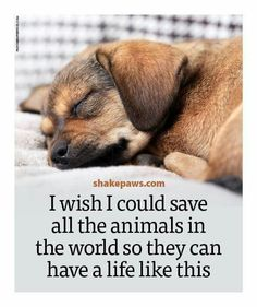 I wish I could save all the animals in the world so they can have a life like this... ♥