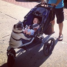 Pug, Stroller, And A Baby