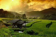 Doi Inthanon National park, Chiang Mai, Thailad