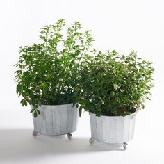 Aissa zinc wheeled planters. Simple, authentic zinc planters in two different sizes for a bold style statement! Plus they come on wheels making them easy to move around. Great for plants or tidying away your magazinesAissa planter:Cylindrical shape.Features of Aissa planter:Made from zincJute handlesTake a look at the full collection online.Size of Aissa planter:ø41 x 24cm and ø45 x 28cm
