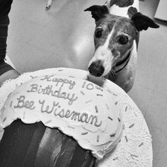 Greyhound ~ Happy Birthday to you!