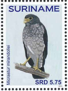 Slaty-backed Forest Falcon stamps - mainly images - gallery format