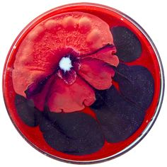 Red Lotus Yoga | Klari Reis | A Daily Dish Project 2014