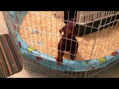 New puppy crying at