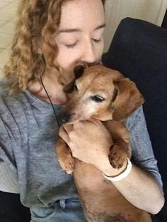 Dachshund Rescue, Dachshund Mix, Dachshunds, Doggies, Best Puppy Food, Wire Haired Dachshund, Best Puppies, The Perfect Dog, Unique Animals