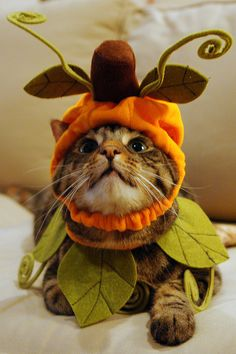 Kitty In A Pumpkin Costume