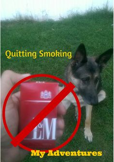 Last pack of cigarettes and photo bomb by Otie. Self Reliance, New Things To Learn, Natural Life, Emergency Preparedness, Simple Living, Survival Skills, Saving Money, Smoking, University