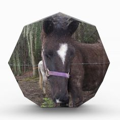 Pretty Brown Horse Award!  These are customizable with text and 3 sizes to choose from!