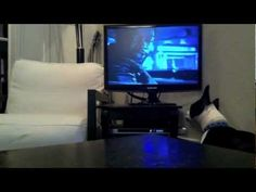 Watch a Boston Terrier Dog named Franck who Loves Watching the Snatch Movie. www.bterrier.com