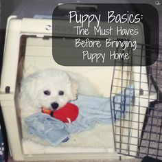 Puppy Basics: The Must Have Checklist Before Bringing Puppy Home