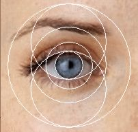 Human eye showing golden ratio proportions
